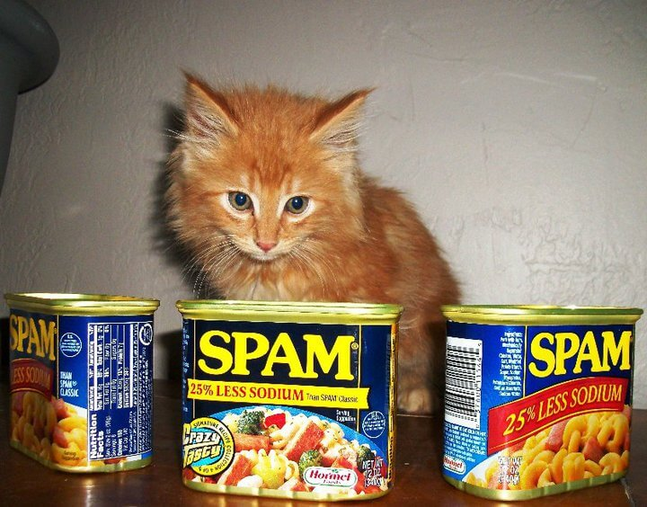 Kitten looking at spam